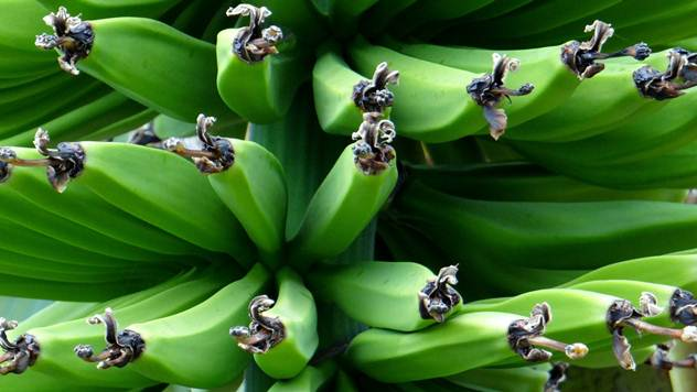 Banana - © Pixabay