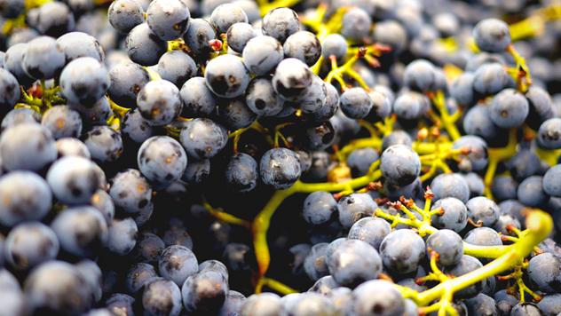 Ilustracija: Zrenje grožđa - © Pixabay