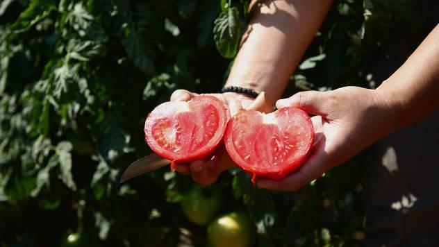 Hibrid RED MACHINE - paradajz vrhunskog ukusa za svakog kupca - © Agromedia