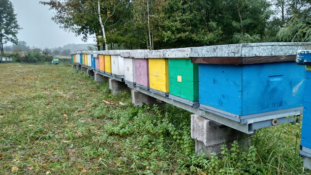 Pčelinjak © Julijana Kuzmić