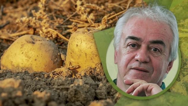 Prerada krompira novi trend - © Agromedia