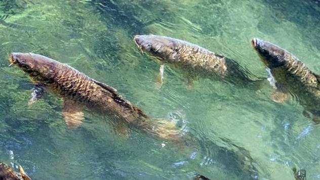Ekstremne temperature ribe mogu podneti samo ako se postebeno prilagođavaju - © Pixabay