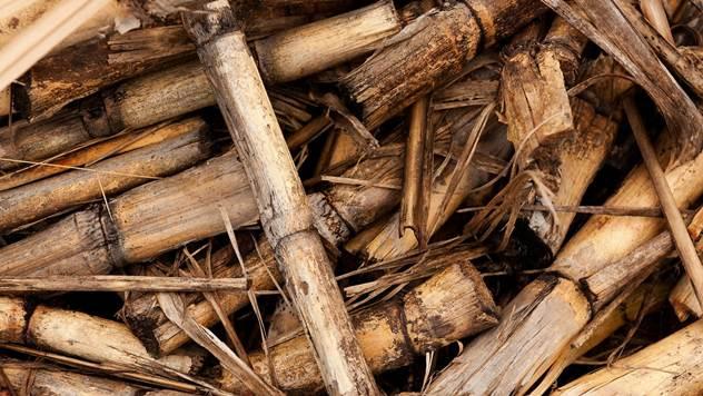 biomasa, trska, grancice