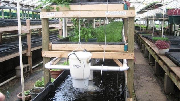 Kod akvaponike bitna svaka kap vode - ©Wikimedia