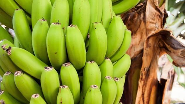 Zašto treba gajiti bananu i kako da je presadite - © Pixabay