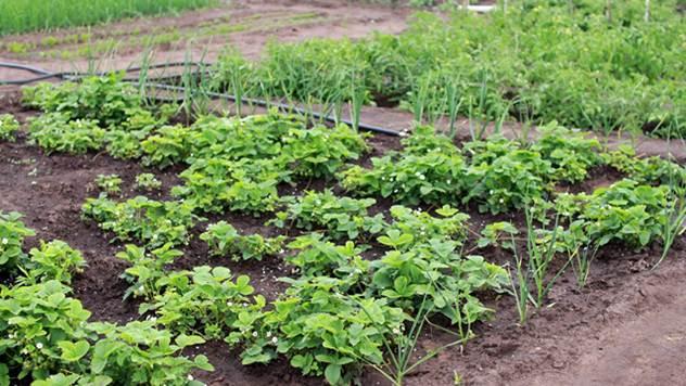 Održiva poljoprivreda - © Pixabay