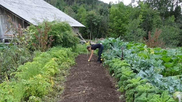Sastav zemljišta u bašti je loš? Evo kako da poboljšate njegov kvalitet - © Agromedia