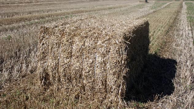 Biomasa - © Nacionalana asocijacija za biomasu SERBO