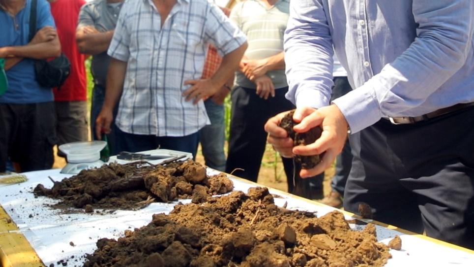Razgradnja žetvenih ostataka - © Agromedia