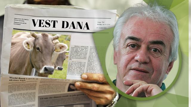 Muža krava kao vest dana - © Agromedia