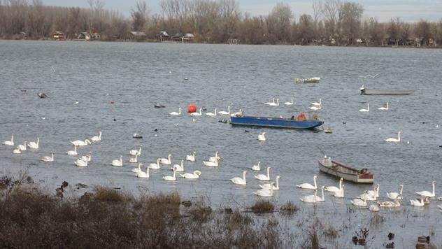 Dunav - © Budimir Novović / Agromedia
