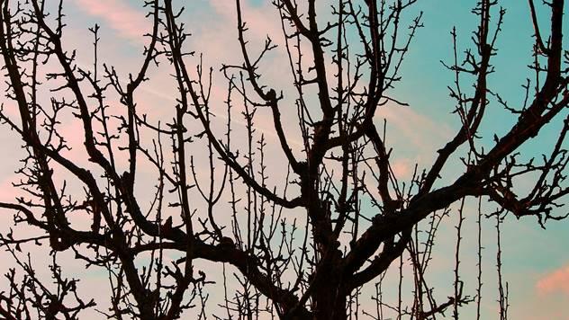 Crne jabuke - © Pixabay