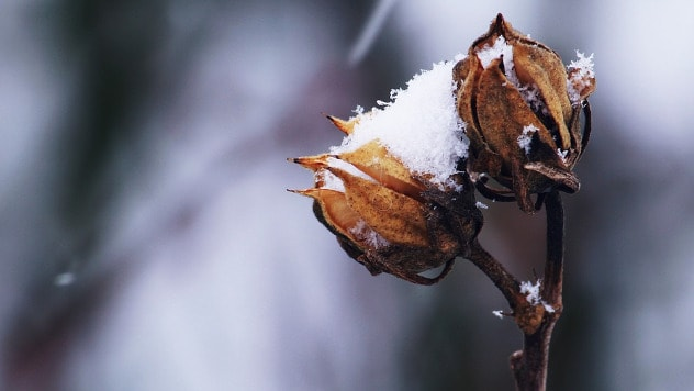 Cveće pod snegom © Pixabay