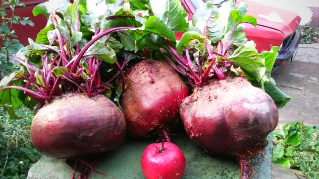 Imate vrt u senci? Ovo je povrće koje možete da gajite - © Pixabay