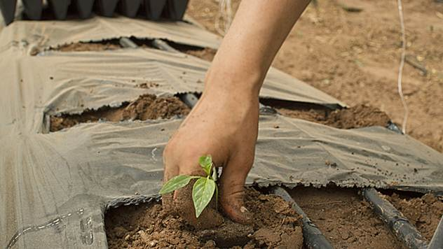 Najviše mladih radi u poljoprivredi - © Agromedia