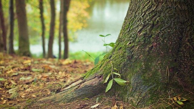Drvo - © Pixabay