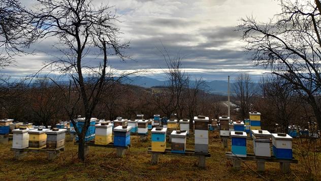 Agroekološklo pčelarstvo - © Julijana El Omari/Agromedia