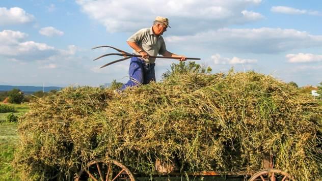 Farmer  - © Piixabay