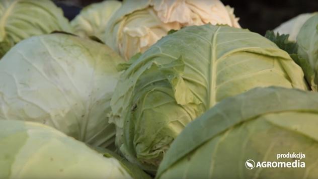 POtražnja za Futoškim kupusom raste, a proizvođači ne mogu da odgovore - © Agromedia
