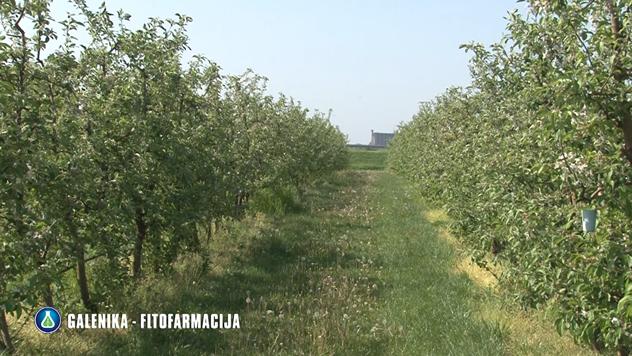 Zaštita voćnjaka © Galenika-Fitofarmacija