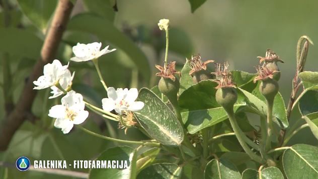 Zaštita voćnjaka © Galenika Fitofarmacija