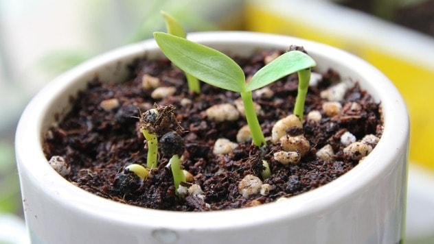 Najbolje rezultate glistenjak daje kod cveća i povrća - ©Pixabay