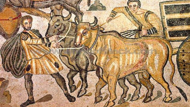 Rimska goveda - © Foto: Igor Prka