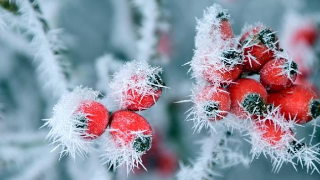 Kako da pomognete biljkama da prezime - © Pixabay