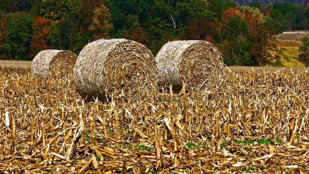 Kukuruzne bale - Pixabay.com