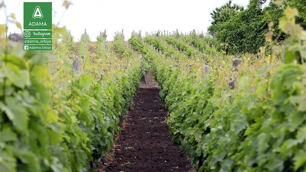 Zaštita vinograda - © Adama