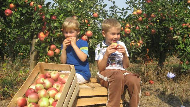 Plantaža jabuka - foto: Biljana Nenković