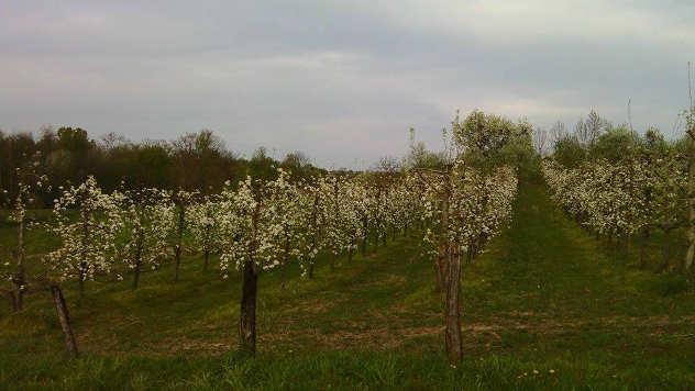 Fotografija porodice Trkulja - Kozarska Dubica - zasad voća