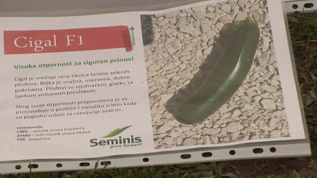 Dan tikvica u Sovljaku - ©Agromedia