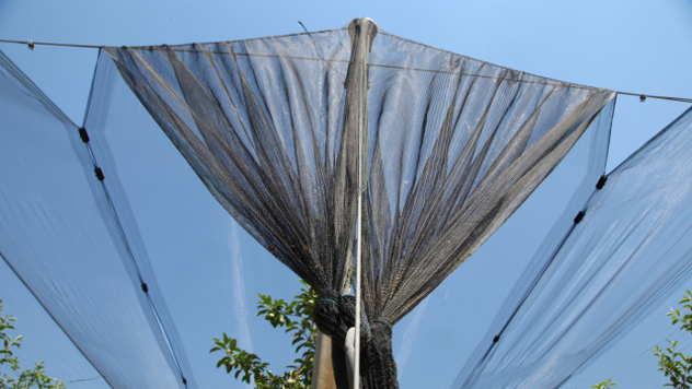 Protivgradna mreža - ©Agromedia