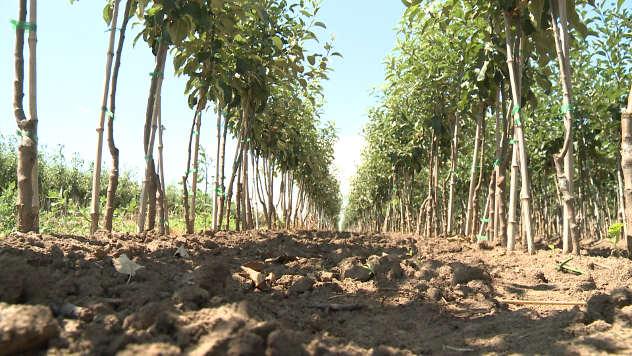 Agromarket - © Agromedia