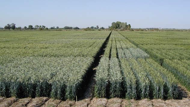 Đubrivo za kvaliteniju biljku - © Agromedia