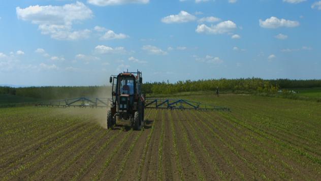 Zaštita mladog kukuruza  - ©Agromedia