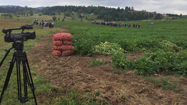 Dan polja krompira - ©Agromedia
