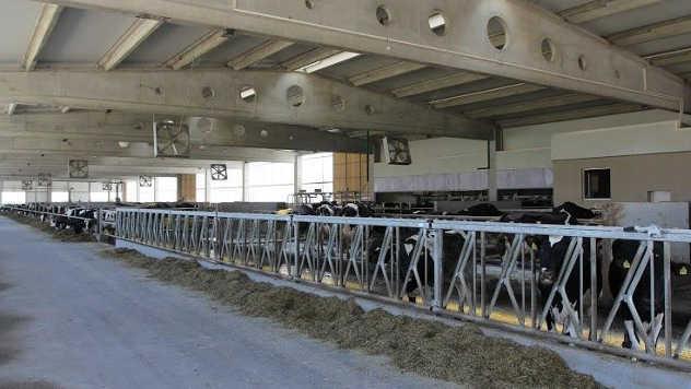 Fotos farma krava - ©Agromedia