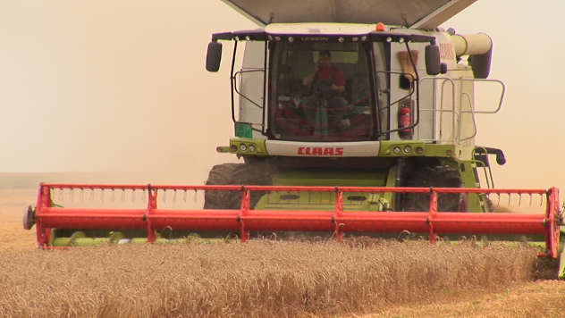 Žetva pšenice - ©Agromedia