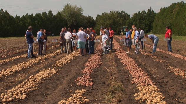 Proizvodnja krompira - © Agromedia