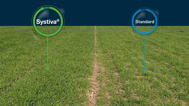 Systiva: Jedini fungicid kojim tretiramo seme a štitimo list! - © Basf