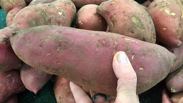 Gajenje slatkog krompira: Batat dobro podnosi sušu - © Pixabay