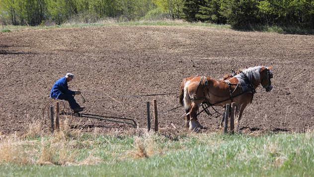 Konj u polju - ©Pixabay