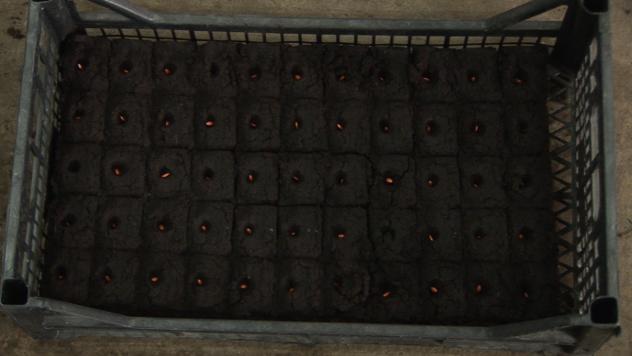 Seme krastavca - ©Agromedia