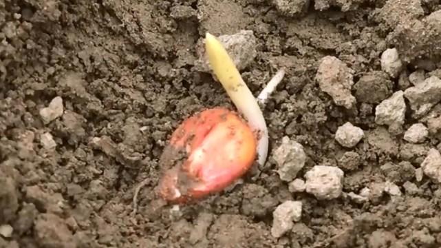 Kako pomoći biljkama da isklijaju nakon tople zime- ©Agromedia