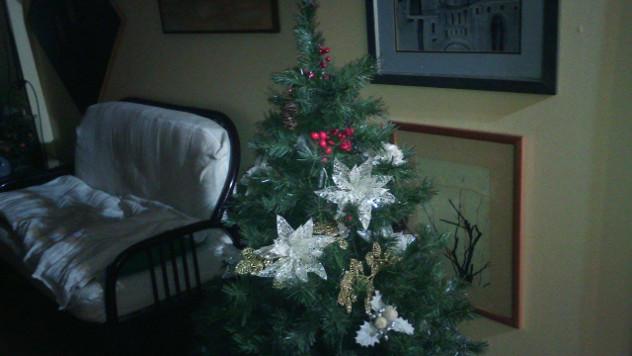 Božićna jelka - @Agromedia