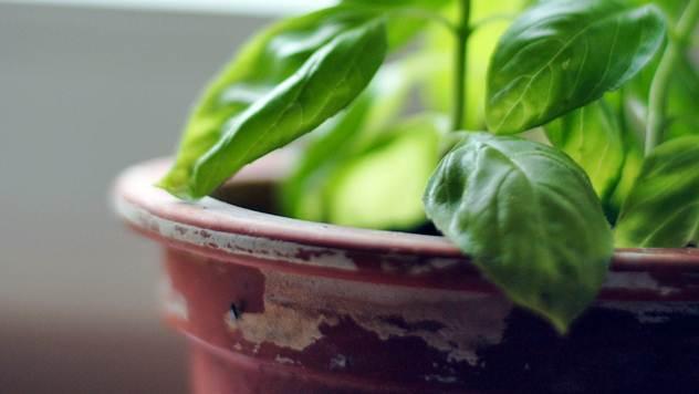 Potrebno je koristiti fosfor, kalijum i kalcijum da bi biljke što bolje napredovale - © Pixabay