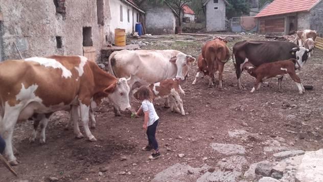 Selo Bruvno imanje porodice Sovilj - © Miroslav Mašić