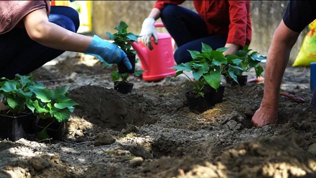 Urbano baštovanstvo:  Samo sat vremena u bašti čini čuda vašem telu- © Radenka Kolarov /Agromedia